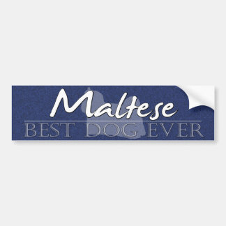 Best Dog Maltese Bumper Sticker