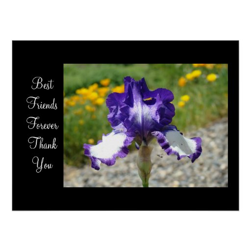 Best Friends Forever Thank You art prints Irises Posters