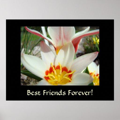 BEST FRIENDS FOREVER! Tulip Flowers Art Prints Posters