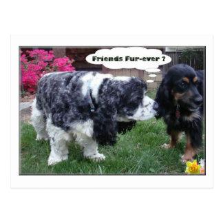 Best Friends Fur-ever Postcard