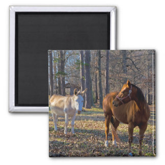 Best Friends Horse and Donkey Magnet