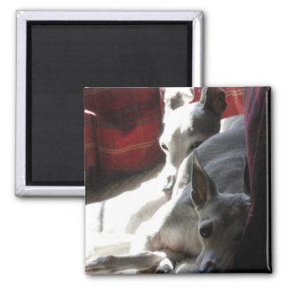 """""""Best Friends"""" italian greyhound photo Magnet"""