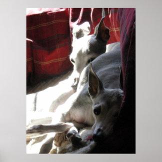 """""""Best Friends"""" italian greyhound photo Poster"""
