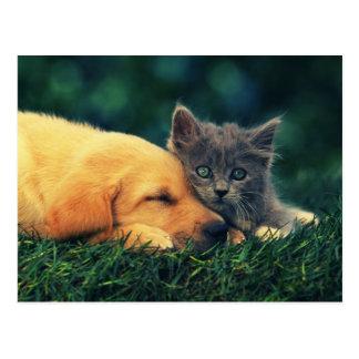 Best Friends - Puppy & Kitty Postcard