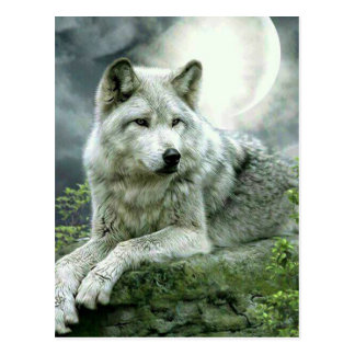 Best Selling Imaginative Wolf Art Illustration Pai Postcard