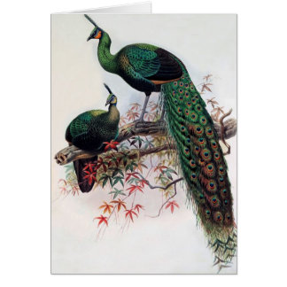 Best wishes, friends, family, Peacock Card