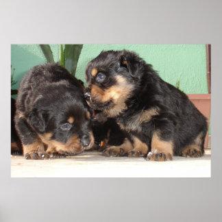 bestRottweiler Puppies Best Friends Forever Print