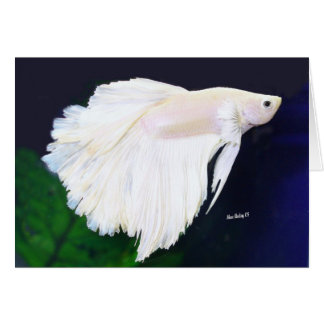 Betta greeting card