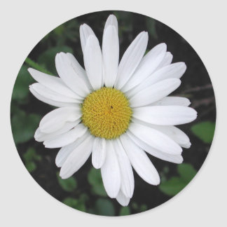 Betty's Daisy Round Sticker