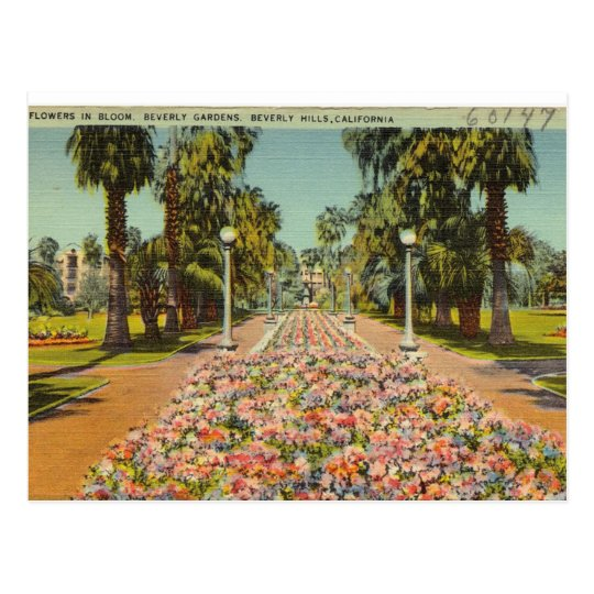 Beverly Hills Flowers Postcard