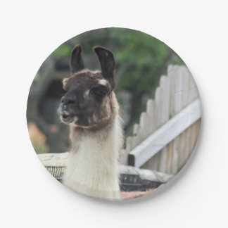 Beware the llama! paper plate