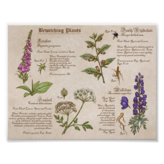 Bewitching Plants Feild Guide Print