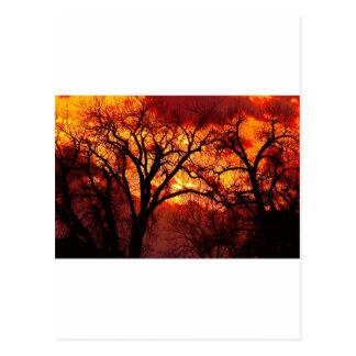Beyond  The Cottonwoods Postcard