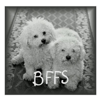 BFFS Cute Dogs Poster Print