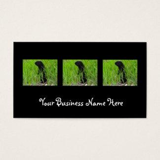 BGRO Black Ground Squirrel Business Card