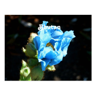 Bhutan Blue Poppy Post Card