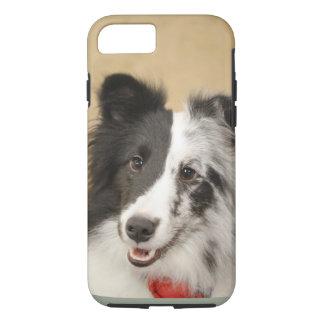 Bi-Blue Merle, Shetland Sheepdog Phone Case