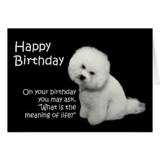 Bichon Birthday Card