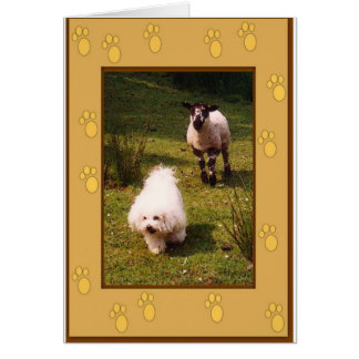 Bichon Frise and Lamb Greeting Card