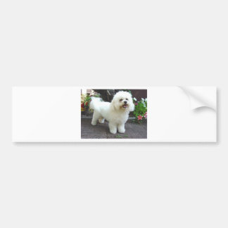 Bichon Frisé Dog Bumper Sticker