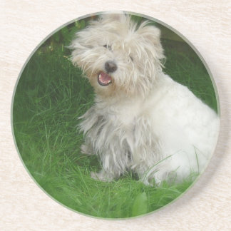 Bichon Frise Dog Coasters