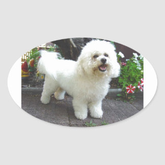 Bichon Frisé Dog Oval Sticker