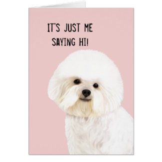 Bichon Frise Illustrated Greeting Card