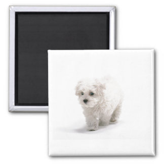 Bichon Frise Photo Magnet