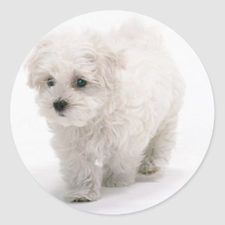 Bichon Frise Photo Stickers