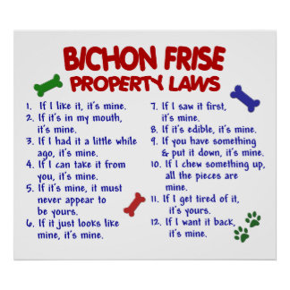 BICHON FRISE PL2 POSTER