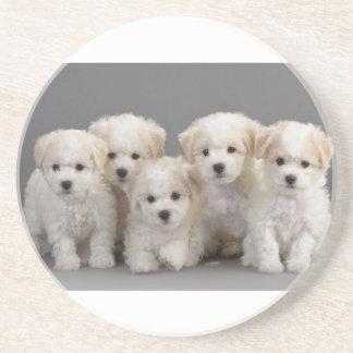 Bichon Frisé Puppies Beverage Coaster