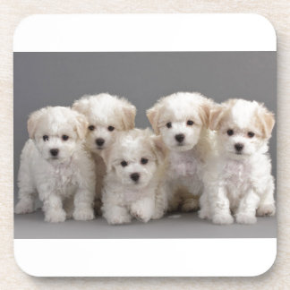 Bichon Frisé Puppies Beverage Coasters