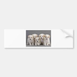Bichon Frisé Puppies Bumper Sticker