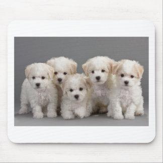 Bichon Frisé Puppies Mouse Pad