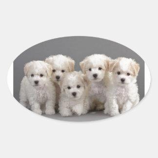 Bichon Frisé Puppies Oval Sticker