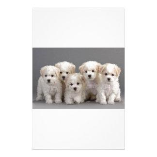 Bichon Frisé Puppies Personalized Stationery