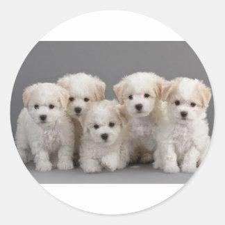 Bichon Frisé Puppies Round Sticker