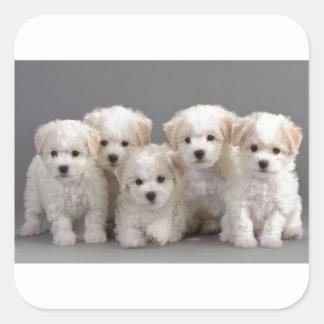Bichon Frisé Puppies Square Sticker