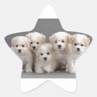 Bichon Frisé Puppies Star Sticker