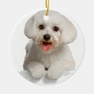 Bichon Frise Puppy Round Ceramic Ornament
