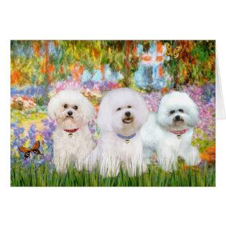 Bichon Frise Trio - Garden (VG) Card