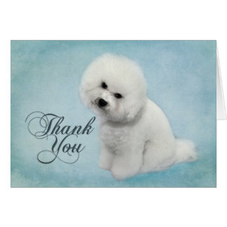 Bichon Thank You Card