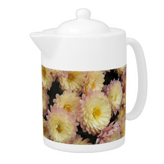 Bicolor Chrysanthemums Floral