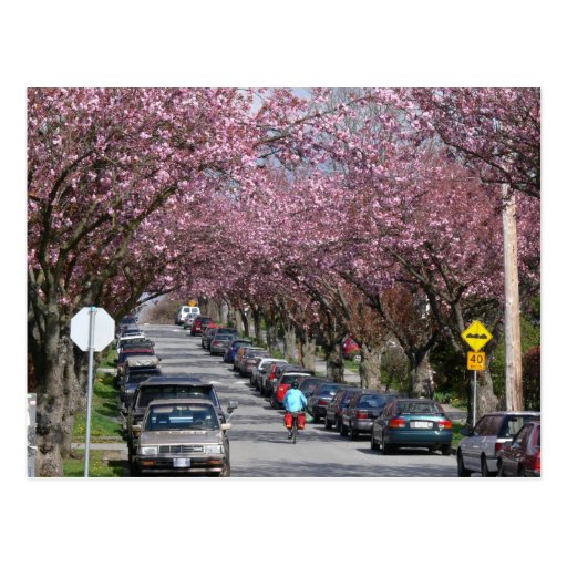 Bicycles and Cherry Blossoms Postcard