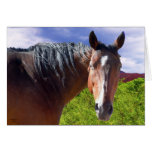 Big Bay American Quarter Horse - Blank Inside Cards
