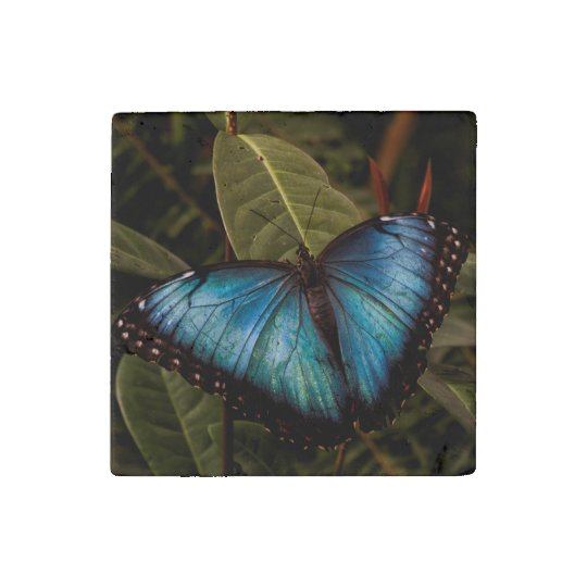 Big,beautiful , blue butterfly stone magnets