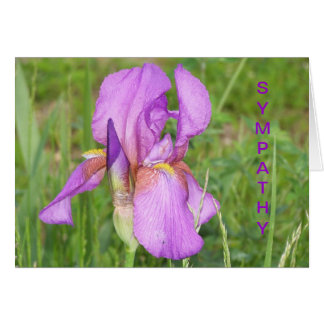 Big Beautiful Iris, Sympathy Card