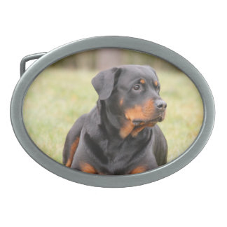 Big Beautiful Rottweiler Belt Buckles