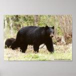big black bear poster