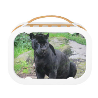 Big Black Jaguar Cat on Sitting on Rock Lunch Box